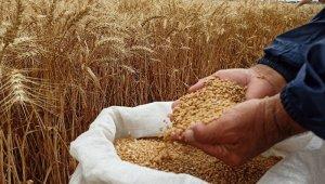 Yerli ve milli buğday tohumu 'kirve' tanıtıldı