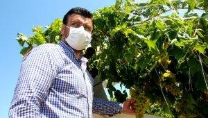 AK Parti'li Milletvekili Akkal, zarar gören bağlarda incelemelerde bulundu