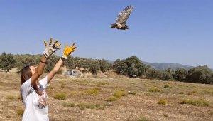 Baykuş yavrusu özgürlüğe kanat çırptı