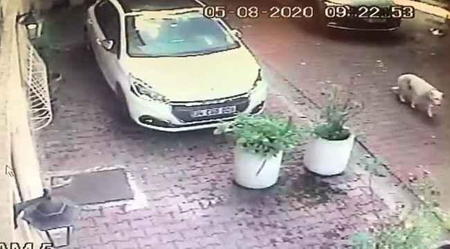 İstanbul'da kadın sürücü köpeğe çarpıp kaçtı