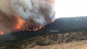 Bolu'da, orman yangınında 1 dönümlük alan zarar gördü