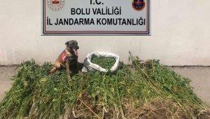 Bolu'da uyuşturucu operasyonu: 3 tutuklama