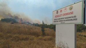 Bursa'daki çiftlik yangını Adalet Ormanı'na sıçradı