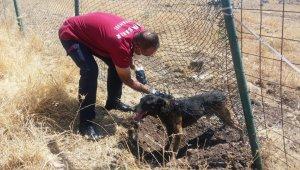 Diyarbakır'da mahsur kalan köpeği itfaiye ekipleri kurtardı