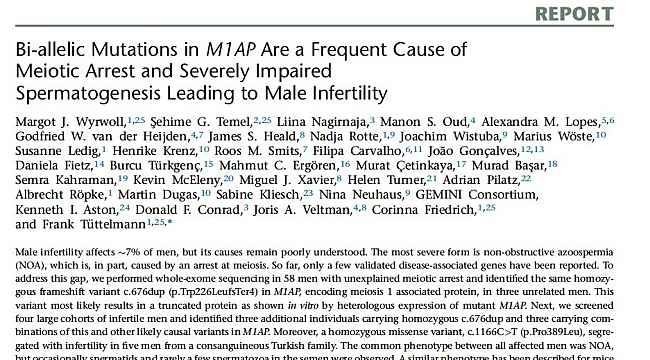 Erkek kısırlığı ile ilişkili yeni bir gen tanımlandı - Bursa Haberleri