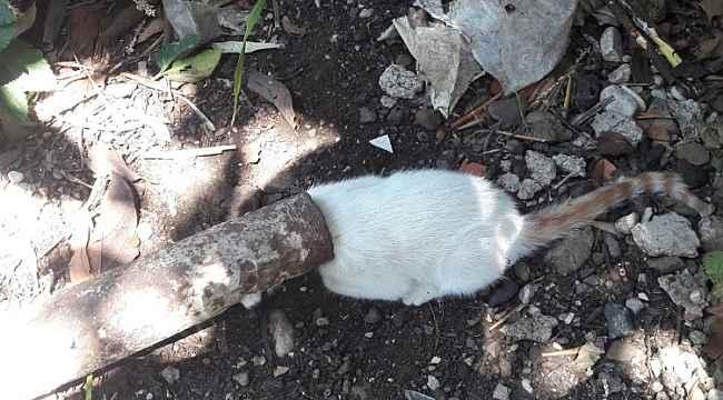 Fethiye'de kafası demir boruya sıkışan yavru kedi kurtarıldı