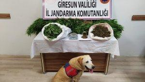 Giresun'da uyuşturucu madde ticareti yapan 2 kişi tutuklandı