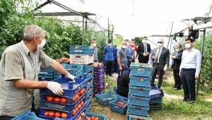 Isparta'da domates ve karanfil hasadı devam ediyor