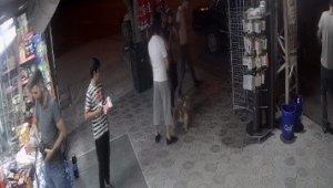 Köpeklere kedi saldırdı, o anlar güvenlik kamerasına yansıdı