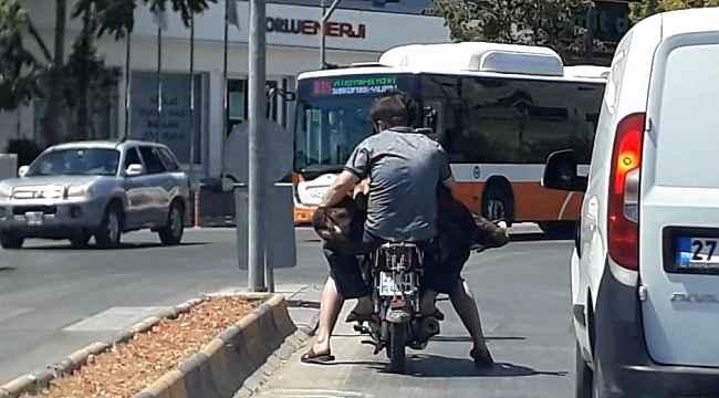 Motosiklete iki kişi ve bir koyun bindiler