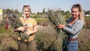 Nilüfer'de üretici lavanta üretimine teşvik ediliyor - Bursa Haberleri