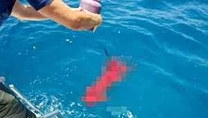 Okyanusa kan döküp köpekbalıklarının arasına daldı