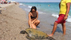 Sahilde yüzen tatilcilere caretta caretta sürprizi