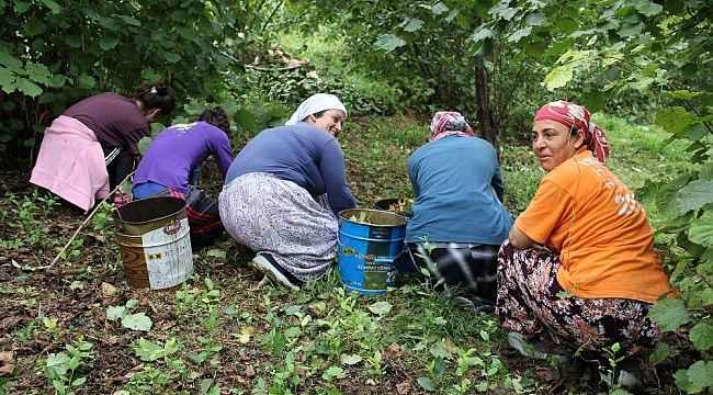 """UFK Başkanı Arslantürk: """"Fındığı daldan değil, yerden toplayın"""""""