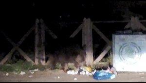 Uludağ'da aç kalan ayı çöpleri karıştırırken görüntülendi - Bursa Haberleri