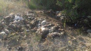 Yol kenarına dökülen kurban atıklarının kokusu köyü sardı