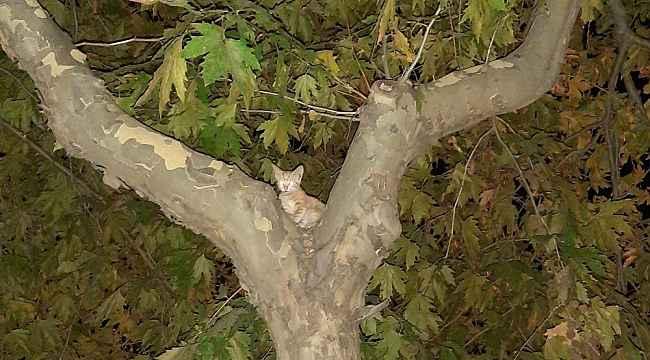 Ağaçta kedi kurtarma operasyonu