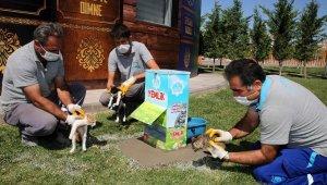 Aksaray'da sokak hayvanları için yemliklere mama ve su takviyesi yapılıyor