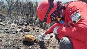AKUT ekibi yangında yaralanan hayvanları kurtardı