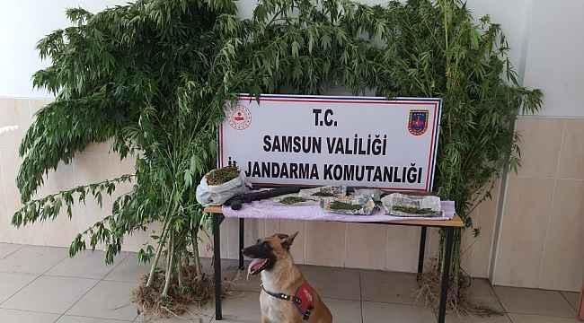 Alacam'da uyuşturucu operasyonu