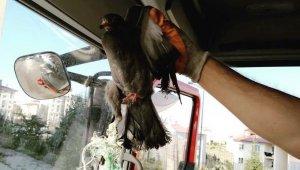 Ayağına ip dolanan güvercini itfaiye kurtardı