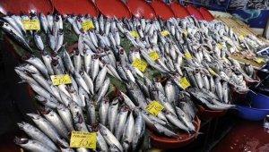 Balık tezgahlarında palamut bolluğu yaşanıyor