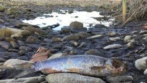 Barajda su seviyesi düştü, binlerce balık telef oldu