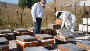 Bayburt Üniversitesinde coğrafi işaretli Bayburt Balının sağımına başlandı
