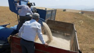 Bitlis'ten 61 şehre fasulye satışı