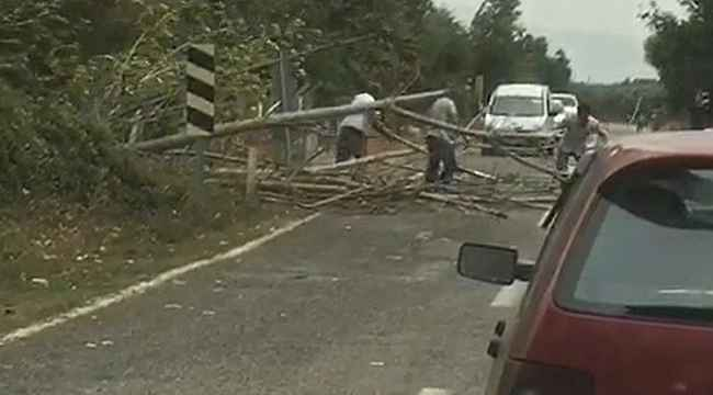 Bursa'da rüzgar ağaçları devirdi, yol trafiğe kapandı - Bursa Haberleri