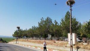 Drone ile leylek yuvalarına bakım çalışması