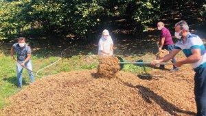 Fındık zurufu ve dalları organik gübre olarak kullanılacak