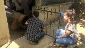 Halı yıkama makinesine sıkışan tilki kurtarıldı - Bursa Haberleri