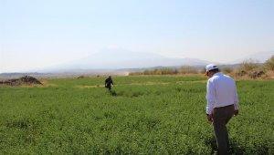 Iğdır'da ıslah edilen meralar tarıma kazandırılıyor