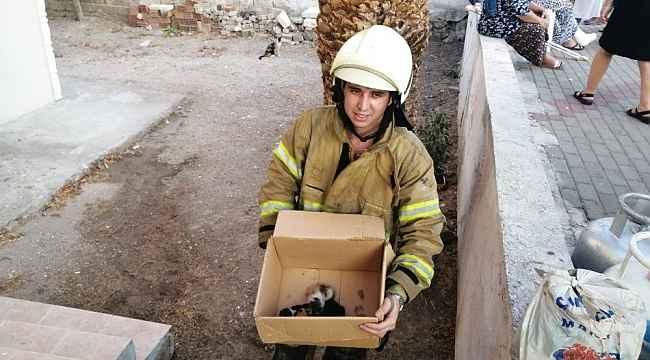 İzmir'de alevlerin arasında kalan 5 yavru kedi, itfaiye ekiplerince kurtarıldı