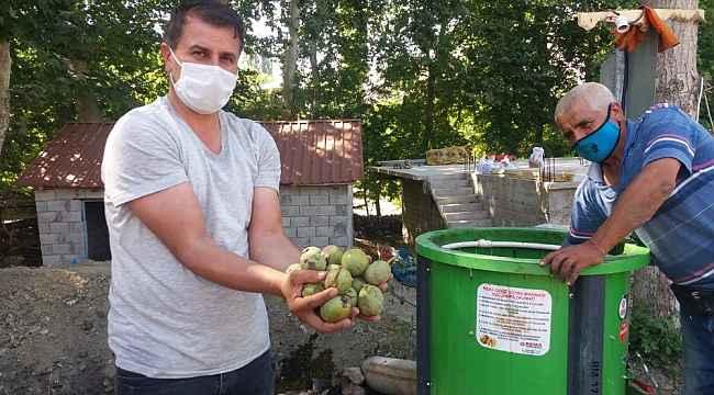 Kahramanmaraş'ta 20 bin ton ceviz rekoltesi bekleniyor