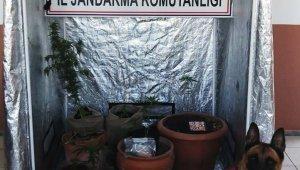 Kenevir üretimi için özel kabin