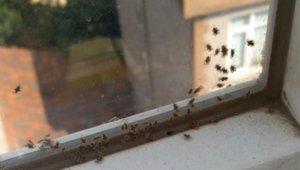 Kocaeli'de 3 ilçeyi böcekler istila etti