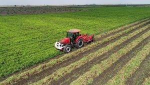 Türkiye'nin yer fıstığı üretiminin yüzde 60'ı Adana'dan
