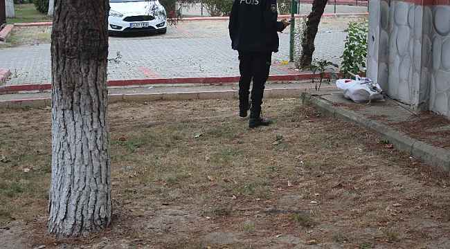 Yaşlı adam ağaçtan düşüp yaralandı