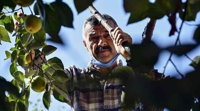 Bu meyve ağacının Gümüşhane'de başka eşi yok