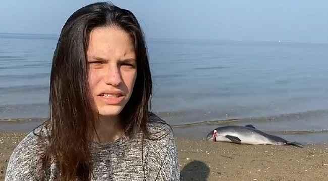 Bursa'da başından vurularak öldürülen yavru yunusun ailesi denizde şov yaptı
