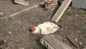 Bursa'da yumurtasını çalan yavru köpeği pompalı tüfekle vurarak öldürdü - Bursa Haberleri