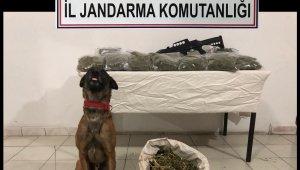 Evdeki esrarı narkotik köpeği Ateş buldu