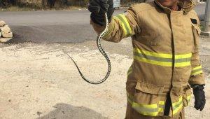 Eve giren yılan itfaiye ekiplerince çıkarıldı