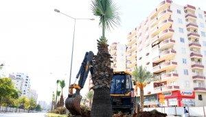 Forum Katlı Kavşağı Projesindeki 113 ağaç sökülerek yeni yerlerine dikiliyor