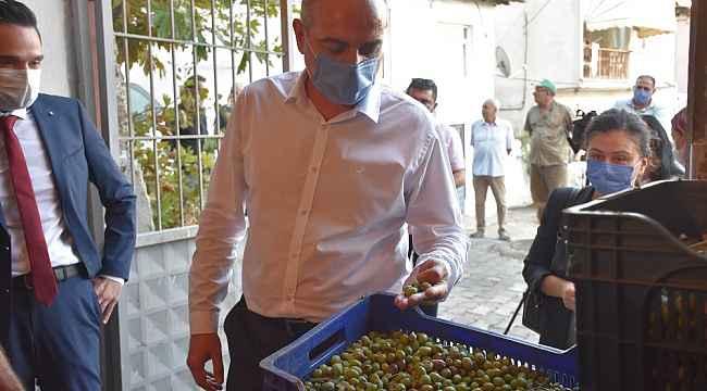 Gemlik Belediyesi zeytin ödemelerine başladı - Bursa Haberleri