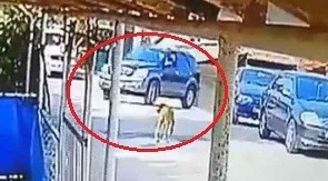 Göz göre göre cipi ile köpeğin üzerinden geçti
