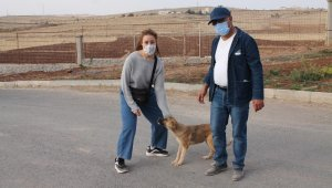 Hercai dizi oyuncuları Midyat'ta sokak hayvanlarını unutmadı