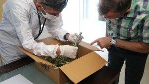 İş yerinde bulduğu bukalemunu Akdeniz Belediyesi ekiplerine teslim etti